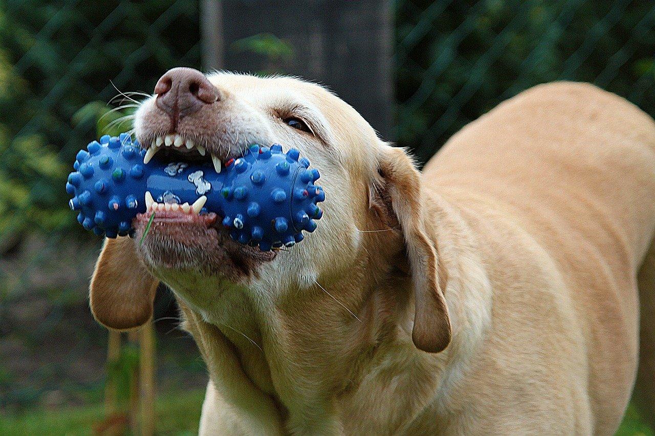 Hond_speelgoed