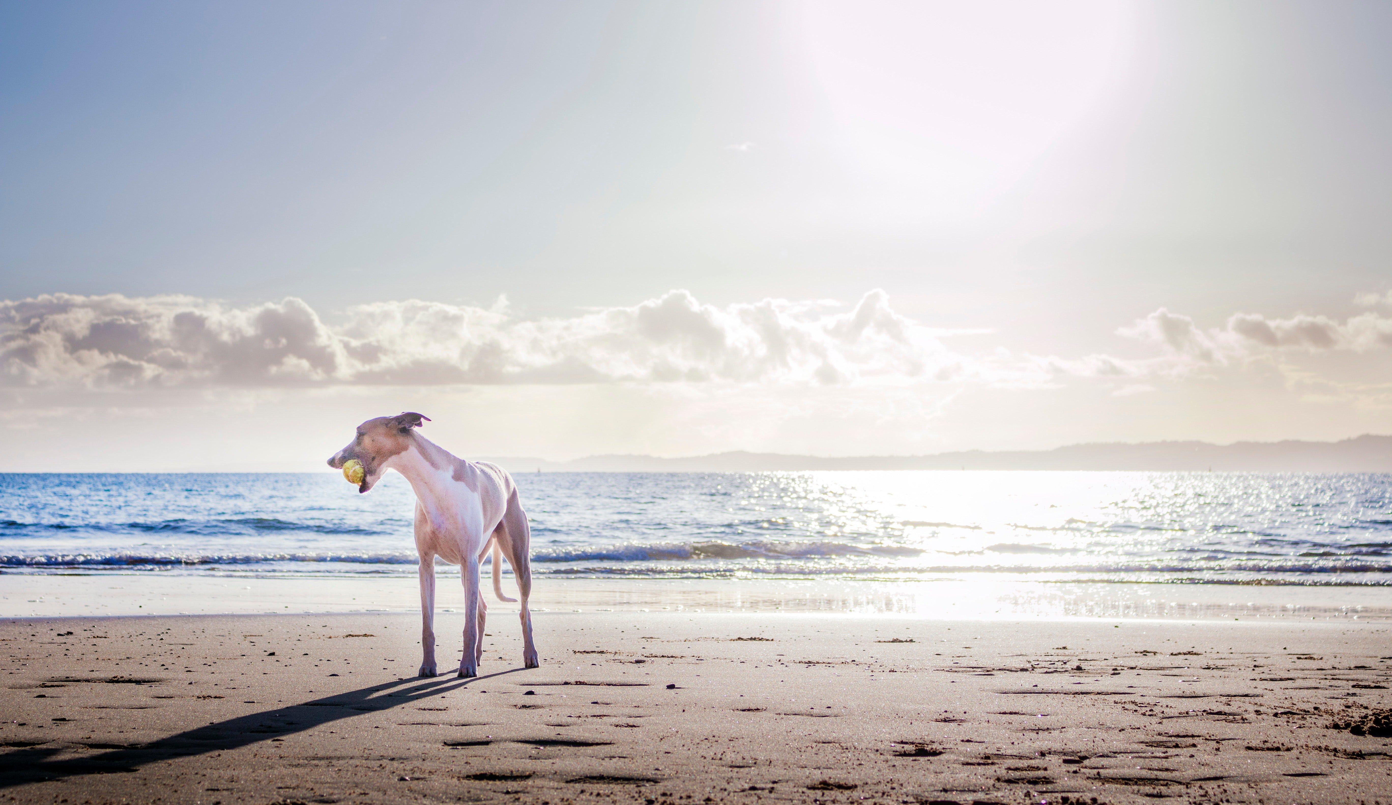 Hond_vakantie