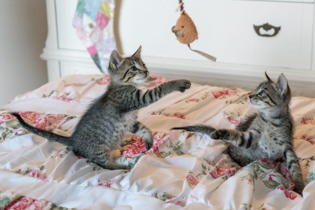 Katten met speelgoed hengel