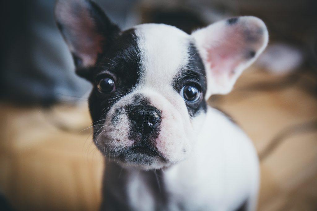 Puppy verzorging