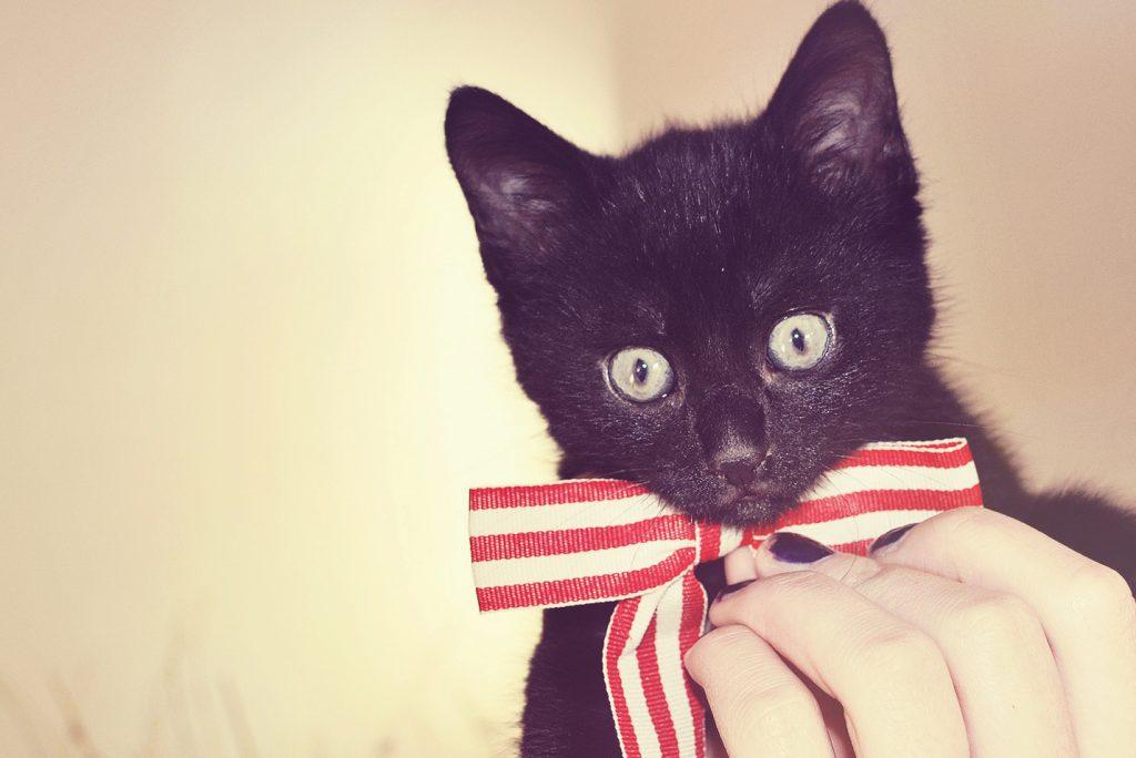 Kat met leuke strik