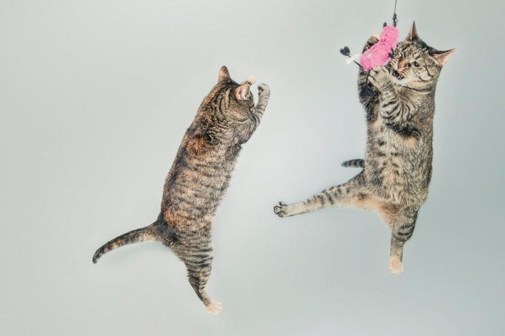 Juiste kattenspeeltjes zijn belangrijk